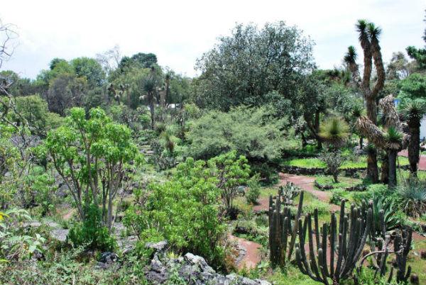 Mxcity Jardin botanico de la unam